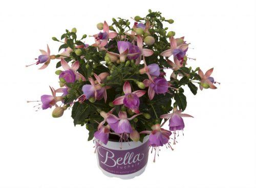 bella-fuchsia-miranda-new